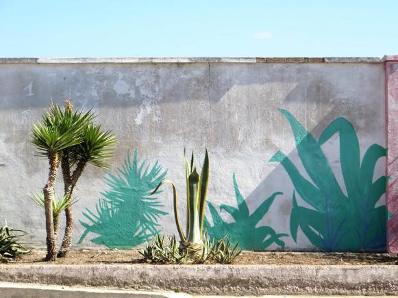 Ombre di piante - San Sperate - Sardegna