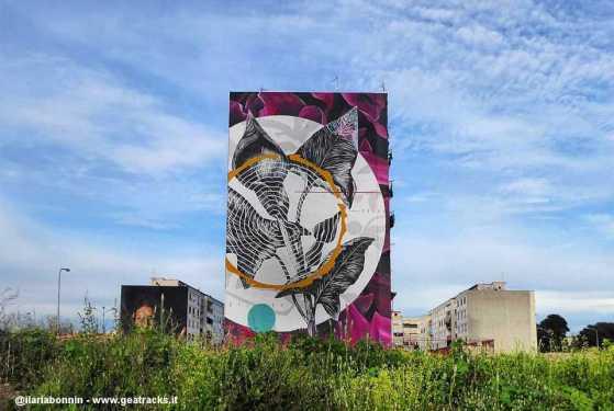 Napoli: A Ponticelli sboccia 'O sciore cchiù felice